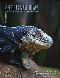 Honduran Paleate Spiny-tailed Iguana (Ctenoosaura melanosterna); Photograph by John Binns