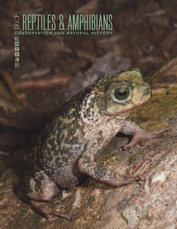 Zapata Toad (Peltophryne florentinoi); Photograph by Thomas Wiewandt