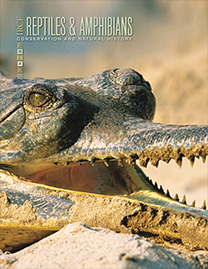 Gharials (Gavialis gangeticus); Photograph by Olivier Born